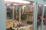 камера для выставки и хранения цветов